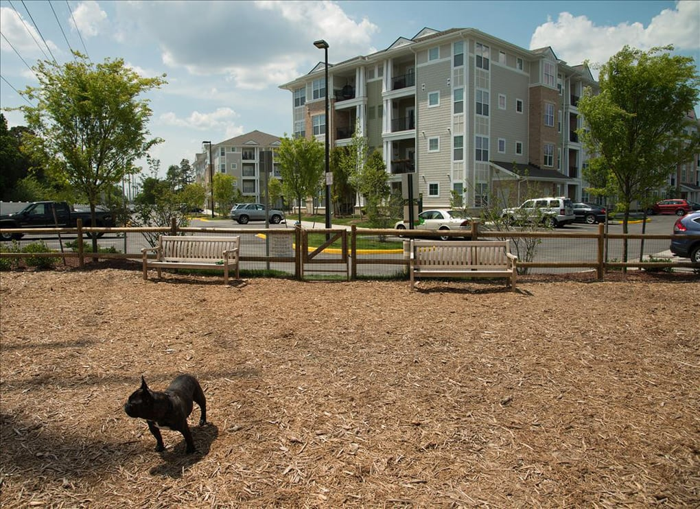 Greenwich Village Luxury Apartment Homes Dog Park